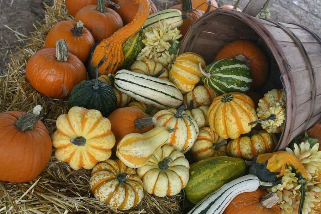 Prices Perryville Pumpkin Farm